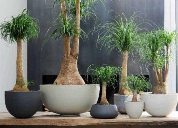 20170617 kikio327154 id127986 imagen 5 - Naturaleza divina. Llena tu hogar de plantas para armonizar energías. - hermandadblanca.org