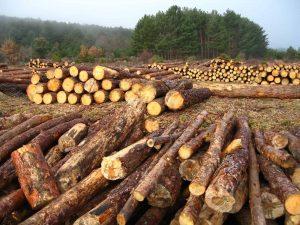 20170701 willyhern39164 id128884 deforestación - La Madre Tierra sigue sangrando, cinco daños que más le afectan - hermandadblanca.org
