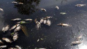 20170701 willyhern39164 id128884 derrame de petróleo - La Madre Tierra sigue sangrando, cinco daños que más le afectan - hermandadblanca.org