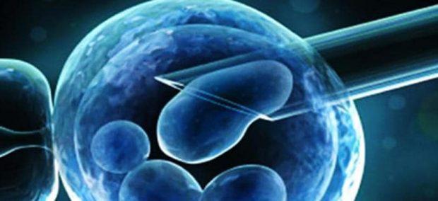 20170711 kikio327154 id129404 imagen 2 - Cuídate de los fraudes. Uso de células madre en cosmetología. - hermandadblanca.org