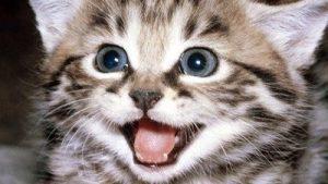 20170714 willyhern39164 id129559 los gatos - Los Gatos: Protectores del Hogar, Defensores de los malos espíritus y Guardianes de las energías negativas - hermandadblanca.org