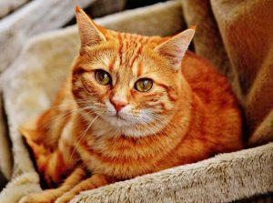 20170714 willyhern39164 id129559 los gatos son especiales - Los Gatos: Protectores del Hogar, Defensores de los malos espíritus y Guardianes de las energías negativas - hermandadblanca.org