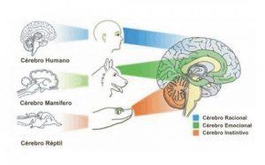 20170718 jariel id129635 Cerebro triuno - Cómo protegernos ante un riesgo de tuberculosis - hermandadblanca.org
