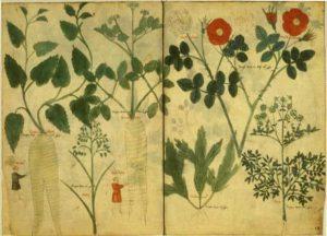 20170721 lauragamboa293742 id129833 nature03 - Hildegarda de Bingen, la curandera que usó  remedios herbales durante los tiempos medievales - hermandadblanca.org