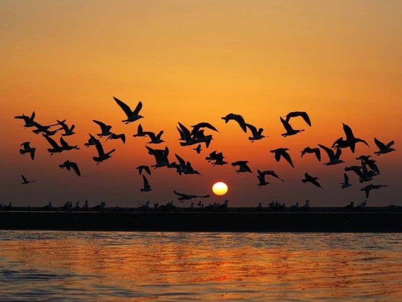 20170827 carolina396 id131392 sincronia aves - La sincronicidad: ¿crees en los milagros? - hermandadblanca.org
