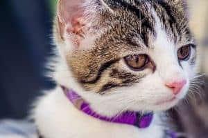 ¿Qué Gestos manifiesta tu Gato? Conoce 7 Gestos de tu Gato que te Protegen de Energías Negativas