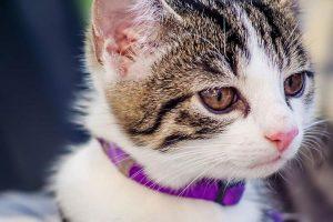 20170903 willyhern39164 id131686 porque los gatos amasan - ¿Qué Gestos expresa tu Gato? Conoce 8 Gestos de tu Gato que te Protegen de Energías Negativas - hermandadblanca.org