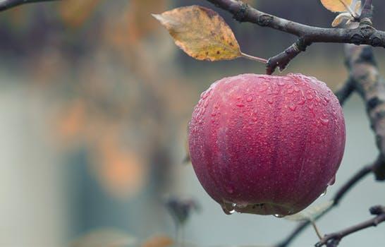 20170914 carolina396 id132164 apple - Saint Germain ~ ¡Aceptáte Como Maestro Alquimista! - hermandadblanca.org