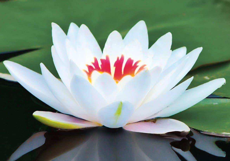 20171004 willyhern39164 id133228 lotusflowerwhite - El Cambio desde el Sentido Místico, Cambiar desde el Propio Yo - hermandadblanca.org