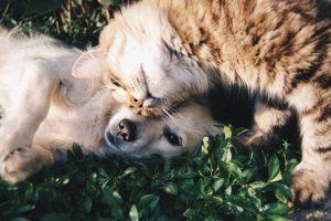 Las mascotas: comunicación y sanación con energía