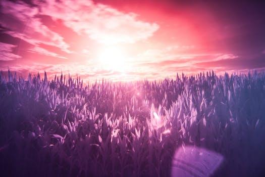 20171029 carolina396 id134388 red sun purple dream - Sananda ~ Los sueños siempre terminan, y el soñador siempre despierta - hermandadblanca.org
