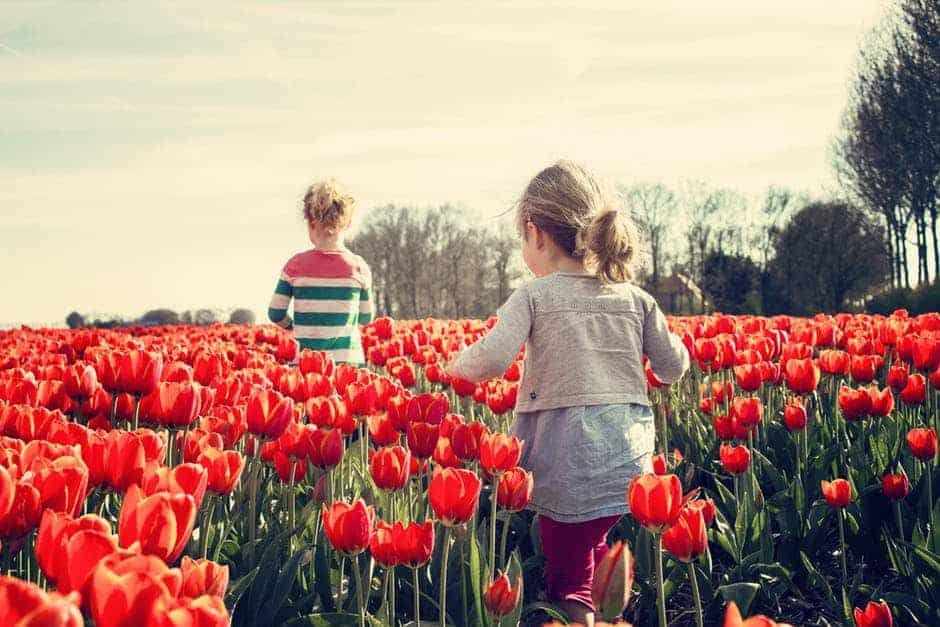 20171120 carolina396 id135220 girls children tulips netherlands - Mensaje de Jesús: No hay absolutamente nada que temer - hermandadblanca.org