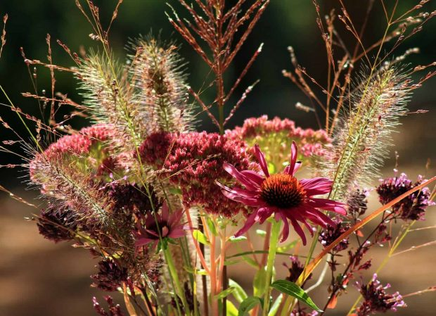florecer - ¡Que el Amor y la Sabiduría estén en vuestros corazones, queridos hermanos! - Maestra Martha - hermandadblanca.org