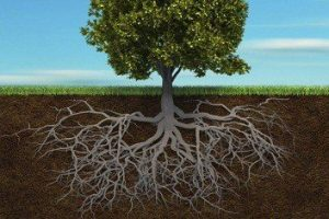Su árbol del dolor se alimenta de cosas que piensan que vienen del otro