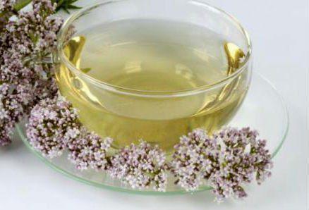 20180222 willyhern39164 id143630 para que es bueno el te de valeriana - Beneficios, Propiedades y Usos Medicinales de la Valeriana - hermandadblanca.org