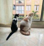 20180224 willyhern39164 id143780 IMG 20170801 130911 - El Misticismo de los Gatos, ¡Enigmáticas Creaturas! - hermandadblanca.org