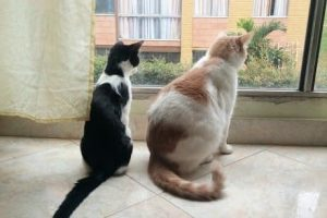 El Misticismo de los Gatos, ¡Enigmáticas Creaturas!