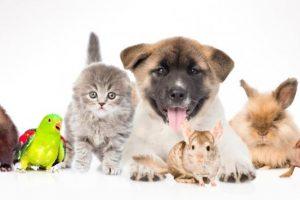 ¿Cómo las Mascotas Pueden Mejorar Nuestra Salud?