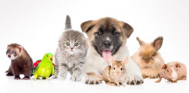 comolasmascotaspuedenmejorartusalud - ¿Cómo las Mascotas Pueden Mejorar Tu Salud? - hermandadblanca.org