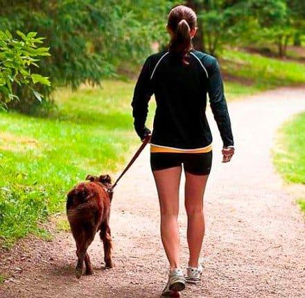 paseandoperro - ¿Cómo las Mascotas Pueden Mejorar Nuestra Salud? - hermandadblanca.org