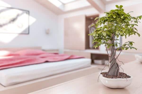 id146567 4 - Reactiva el flujo energético de tu casa. - hermandadblanca.org