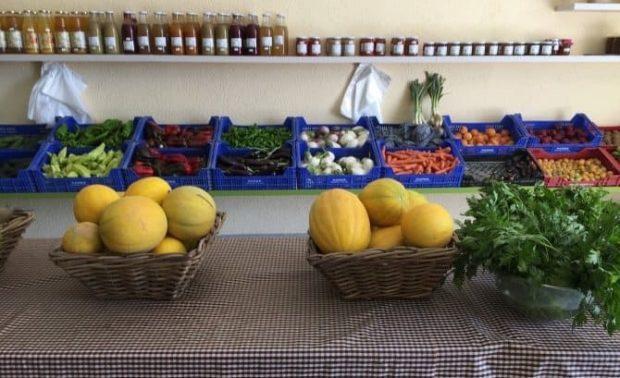 id146813 melon 2 - Taller Detoxificación 5-5-5 - hermandadblanca.org