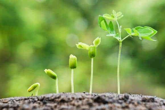 crecimiento - La Transformación de la Personalidad - hermandadblanca.org