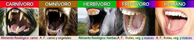 comparaciones fisiologicas copia de regreso a tu origen nutricional ID149565 - hermandadblanca.org