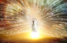 descarga mensaje de orionis: ustedes son el amor divino ID149725 - hermandadblanca.org