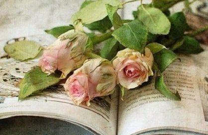 ob f3a97f 1520717 611478445571904 378208150 n mensaje la madre maría: si sus vidas son rosas, sus almas representan ID149591 - hermandadblanca.org