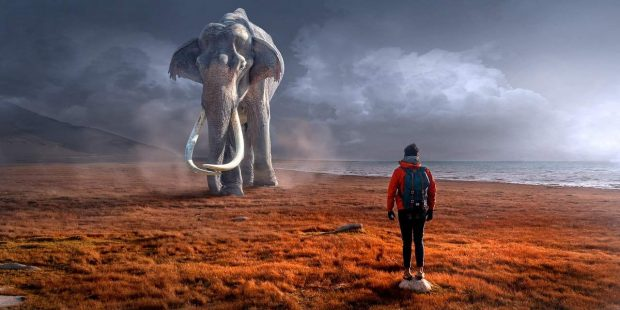 persona y elefante reconiendo los errores del pasado ¿sabes porque siempre vuelves a cometer los mismos errores del pasado ID149373 - hermandadblanca.org