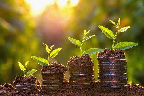 Money growing concept,Business success concept, Tree growing on - hermandadblanca.org