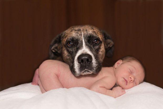 """bebe y perro en masajes de toques de mariposas ¿conoces el masaje llamado """"toque de mariposa""""? ID152969 - hermandadblanca.org"""