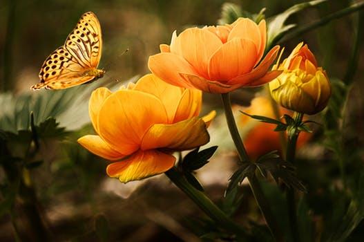 flowers background butterflies beautiful 87452 el arcángel miguel acerca del amor propio… ¡las cosas están m ID152939 - hermandadblanca.org