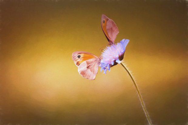 """mariposasenflorenmasajesdetoquesdemariposa ¿conoces el masaje llamado """"toque de mariposa""""? ID152969 - hermandadblanca.org"""
