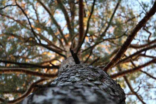 pexels photo 91491 jesús sananda: perdonarse a uno mismo es necesario en todo momento ID153601 - hermandadblanca.org