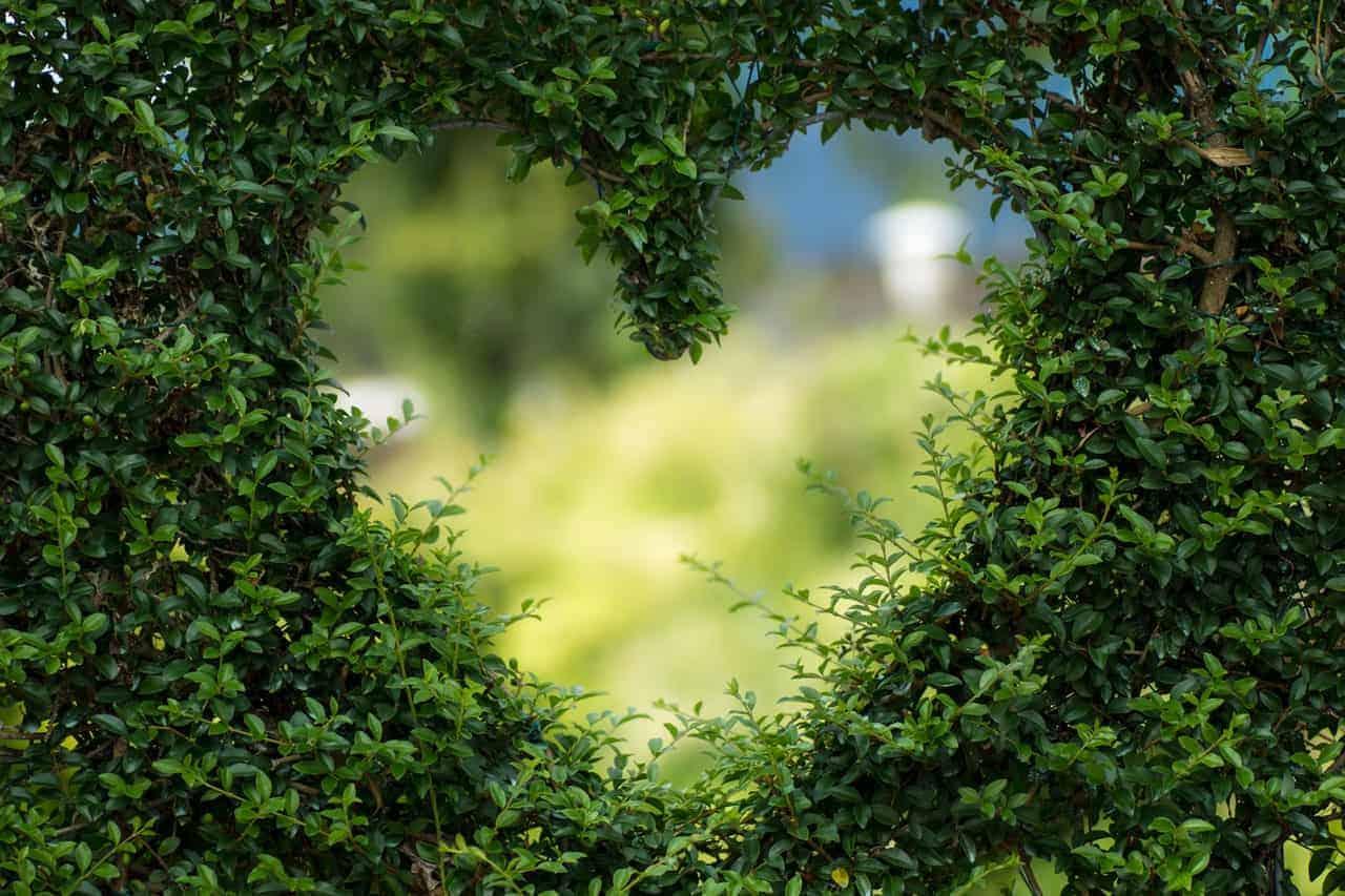 construcciones sostenibles: planta en forma de corazón