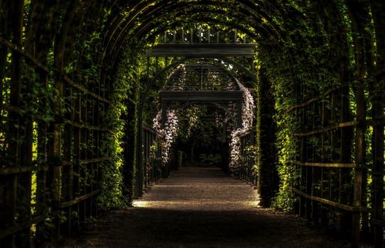 responsabilidad: la puerta de entrada a la ascensión, por saint germain