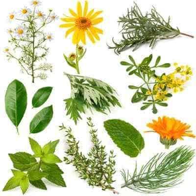 plantas curativas ¿por qué las plantas son esenciales y tan indispensables para recupe ID154323 - hermandadblanca.org