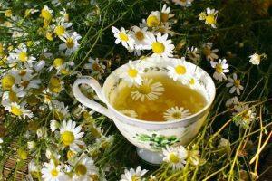 ¿Por qué las Plantas son Esenciales e Indispensables para Recuperar la Salud y Mantener el Cuerpo Sano? ¡Plantas Curativas a tu alcance!