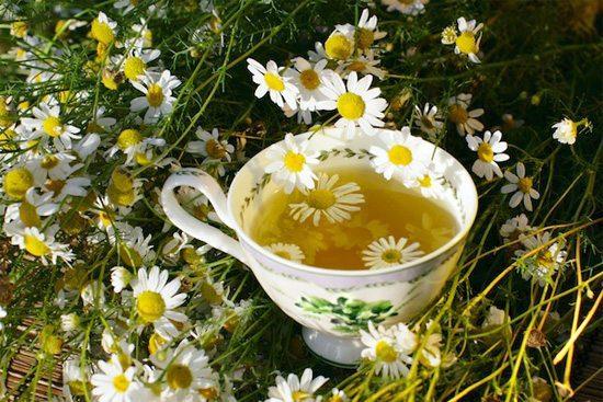 plantas curativas a tu alcance ¿por qué las plantas son esenciales y tan indispensables para recupe ID154323 - hermandadblanca.org