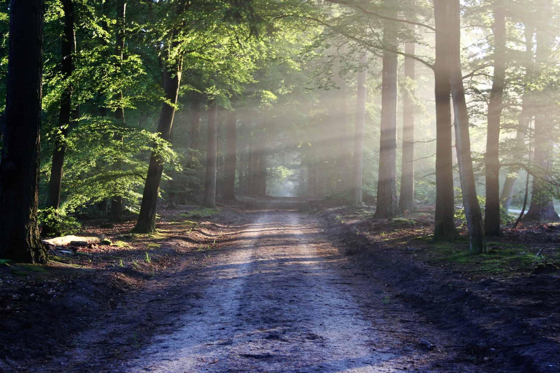 road sun rays path saint germain: la magia del amor en movimiento se ve en las pequeñas  ID154465 - hermandadblanca.org