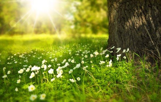 spring tree flowers meadow 60006 mensaje del arcángel uriel: tu majestuosa creación final está aquí ID154081 - hermandadblanca.org