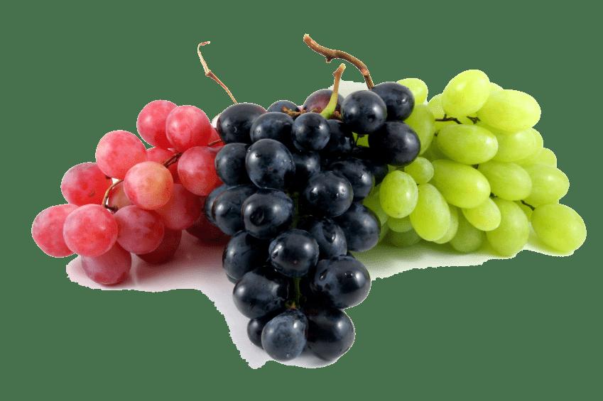 uvas para mantener el cuerpo sano ¿por qué las plantas son esenciales y tan indispensables para recupe ID154323 - hermandadblanca.org
