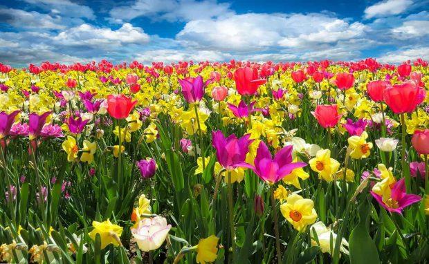 amor incondicional y tradicion judeocristiana parte 4 flores primavera amor incondicional y tradición judeocristiana – parte 4 ID157199 - hermandadblanca.org