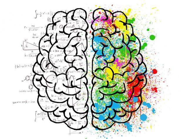 cerebro derecho e izq en sabias que usamos todo el cerebro y no el 10 por ciento ¿sabías que usamos todo el cerebro y no el 10 % por ciento? ID156995 - hermandadblanca.org