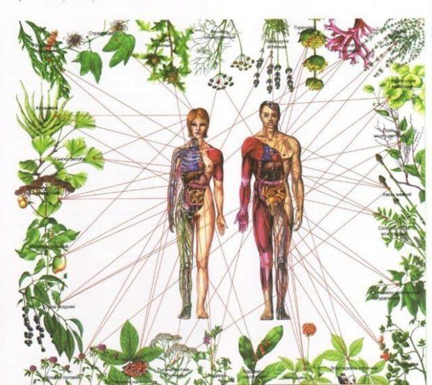cuerpos nutrir todos tus cuerpos ID157309 - hermandadblanca.org