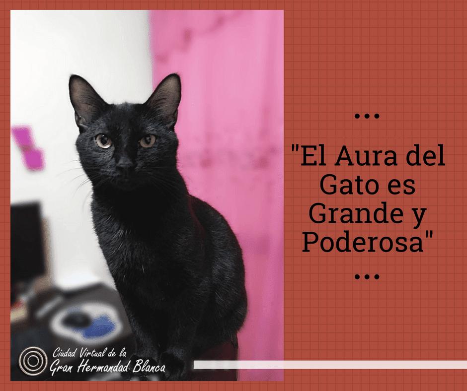el aura de los gatos tiene mucho poder los gatos son protectores del hogar contra espíritus negativos y fant ID156533 - hermandadblanca.org