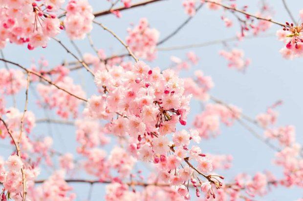 flores del arbol en en amor incondicional parte 2 ¿amor incondicional y tradición judeocristiana? parte ID157195 - hermandadblanca.org