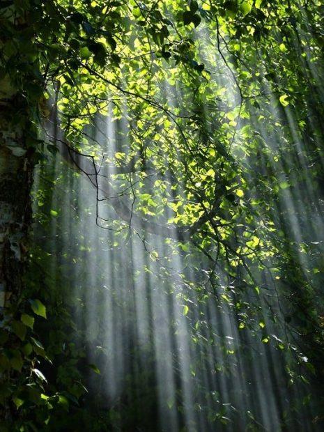 forest 56930 960 720 despertando la iluminación, mensaje de los seres blancos celestiales ID155447 - hermandadblanca.org